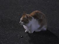 Isumi_kuniyosi20170620_04