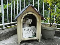 Hakonetozan20170626_49