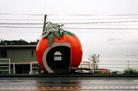 Konagai_tomato