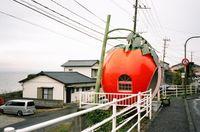 Konagai_tomato2
