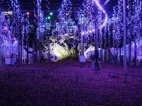 Ashikaga20181216_084