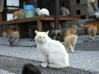 Fukashima20190223_046