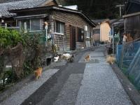 Fukashima20190223_068