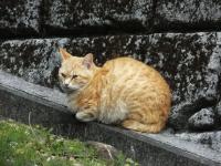 Fukashima20190224_031