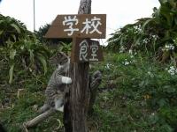 Fukashima20190224_061