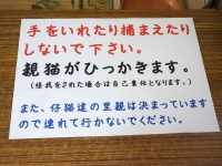 Isumi_kuniyosi20180619_09
