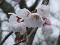 Isumi_nakagawa20190330_02