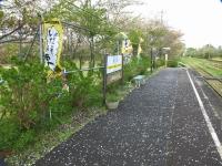 Kuniyosi20180406_04