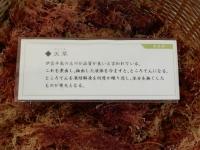 Tokikake20191123_062