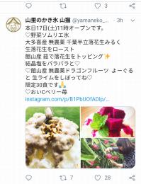 Yamaneko20190817_02